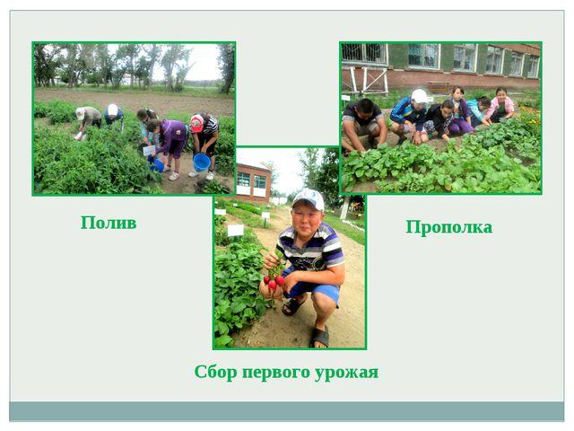 Полив Прополка Сбор первого урожая