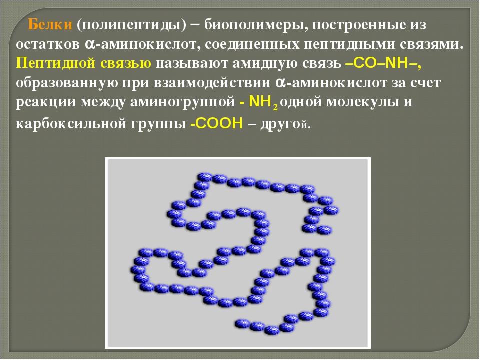 Белки (полипептиды)  биополимеры, построенные из остатков -аминокислот, со...