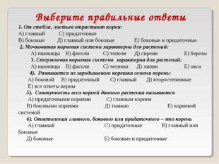 Выберите правильные ответы 1. От стебля, листьев отрастают корни: А) главный