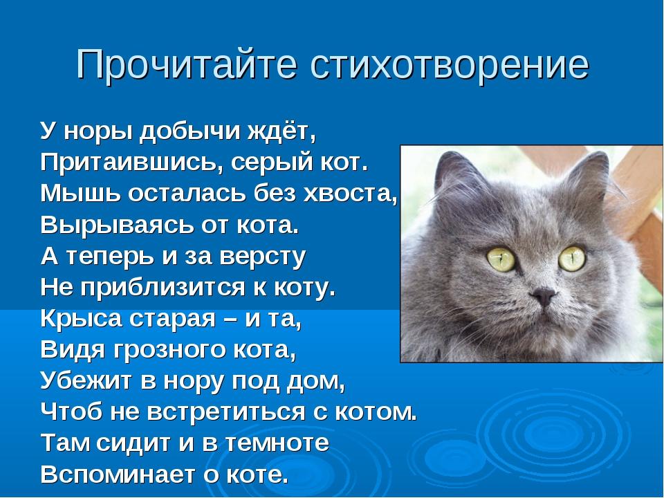 Прочитайте стихотворение У норы добычи ждёт, Притаившись, серый кот. Мышь ост...