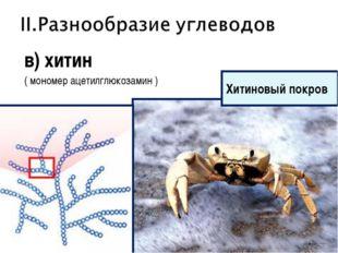 в) хитин ( мономер ацетилглюкозамин ) Хитиновый покров