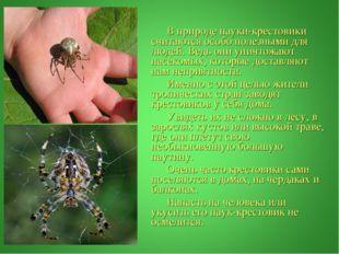 В природе пауки-крестовики считаются особо полезными для людей. Ведь они уни