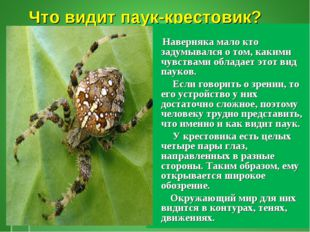Что видит паук-крестовик? Наверняка мало кто задумывался о том, какими чувств