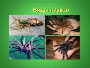 Виды пауков
