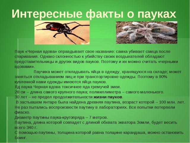 Интересные факты о пауках Паук «Черная вдова» оправдывает свое название: самк...