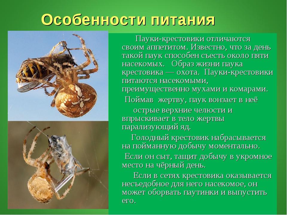 Особенности питания Пауки-крестовики отличаются своим аппетитом. Известно, ч...