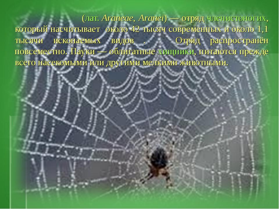Пауки́ (лат.Araneae, Aranei)— отряд членистоногих, который насчитывает око...