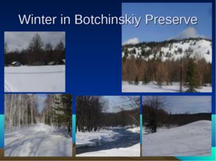 Winter in Botchinskiy Preserve