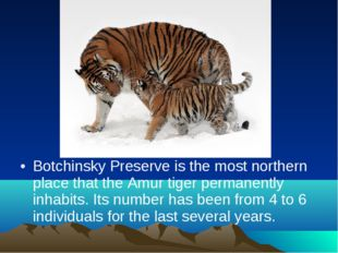 Botchinsky Preserve is the most northern place that the Amur tiger permanentl