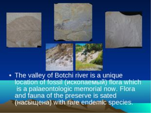 The valley of Botchi river is a unique location of fossil (ископаемый) flora
