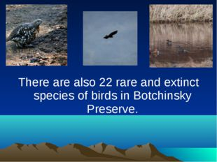 There are also 22 rare and extinct species of birds in Botchinsky Preserve.