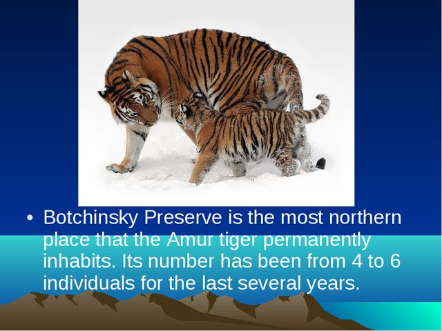 Botchinsky Preserve is the most northern place that the Amur tiger permanentl...