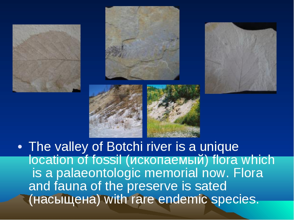 The valley of Botchi river is a unique location of fossil (ископаемый) flora...