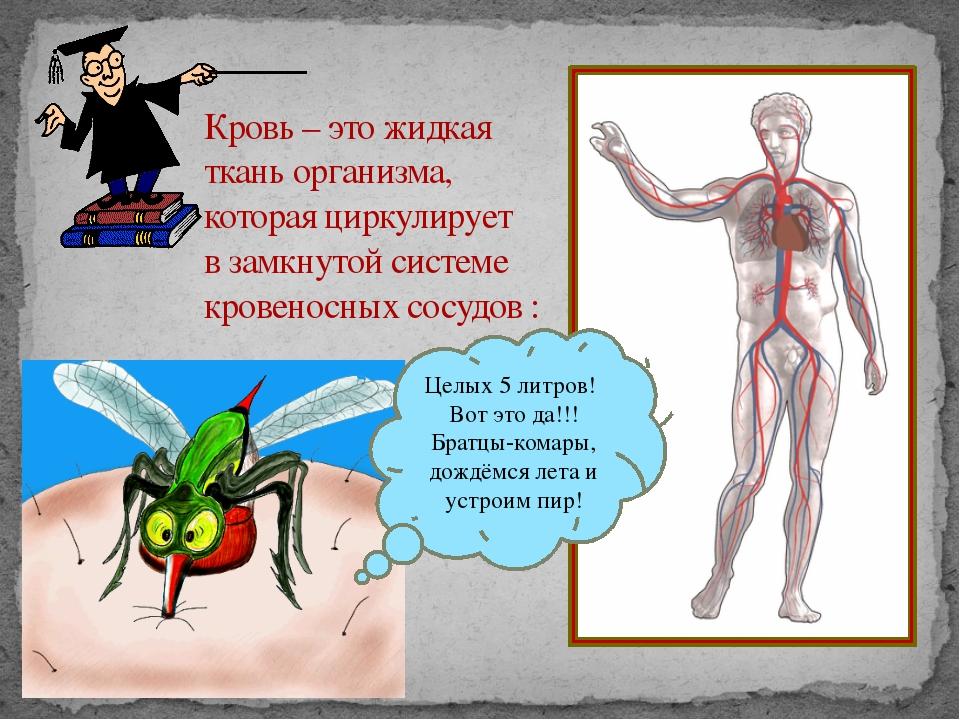 Кровь – это жидкая ткань организма, которая циркулирует в замкнутой системе...