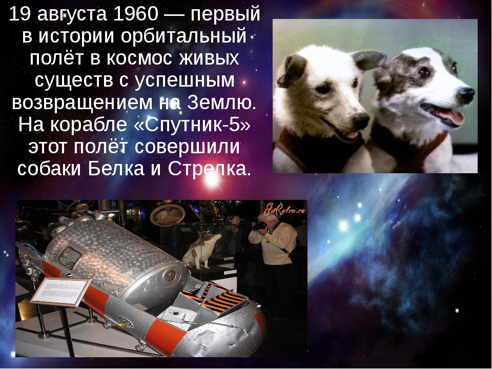 19 августа 1960— первый в истории орбитальный полёт в космос живых существ...