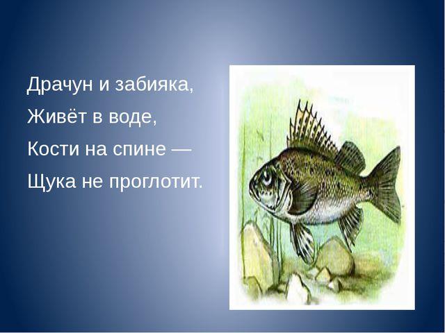 Драчун и забияка, Живёт в воде, Кости на спине — Щука не проглотит.