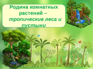 Родина комнатных растений – тропические леса и пустыни