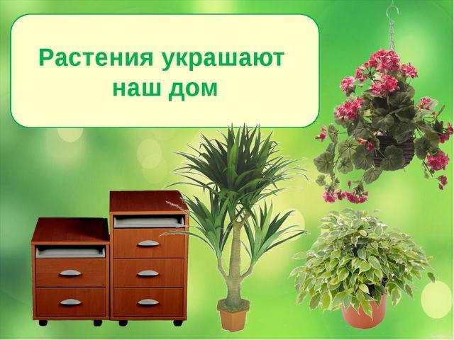 Растения украшают наш дом