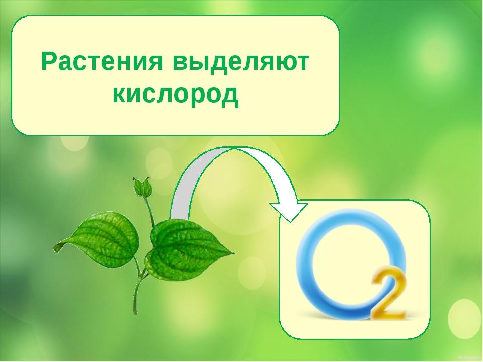 Растения выделяют кислород