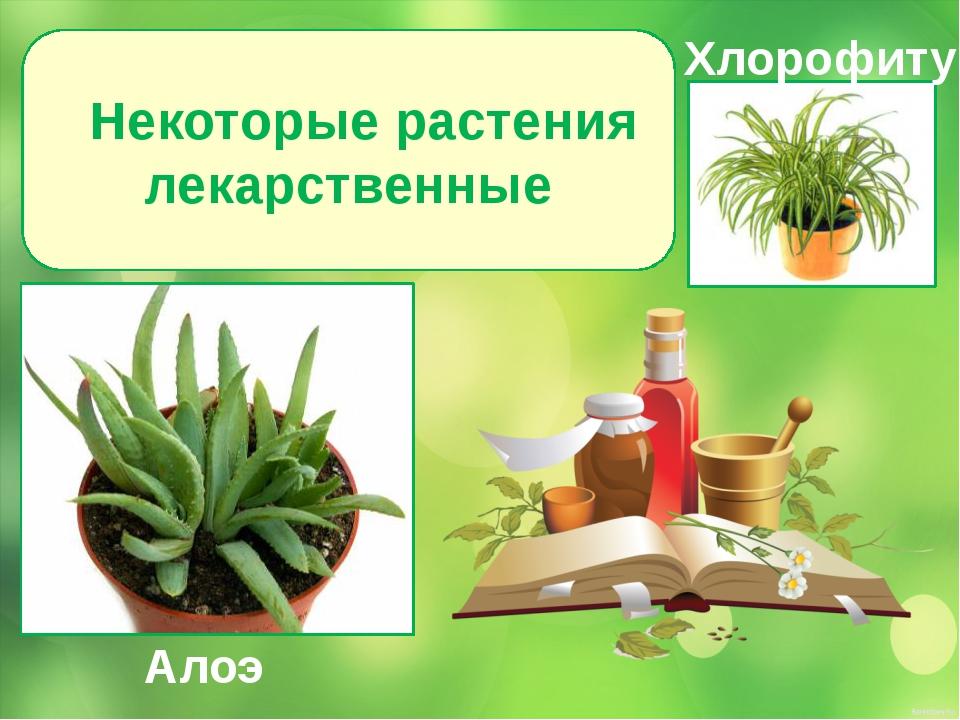 Некоторые растения лекарственные Алоэ Хлорофитум