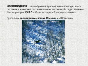Заповедник - своеобразная Красная книга природы, здесь растения и животные со