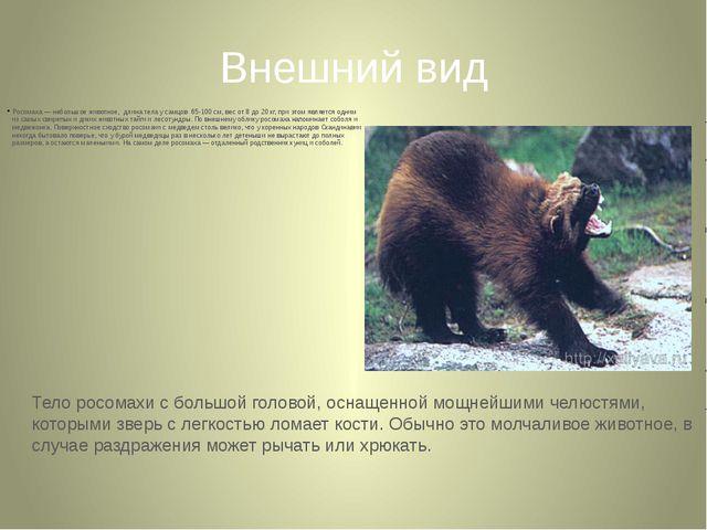 Внешний вид Росомаха — небольшое животное, длина тела у самцов 65-100 см, вес...
