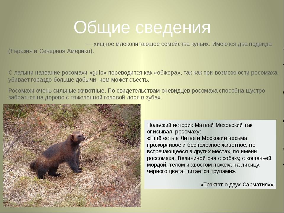 Общие сведения Росома́ха, россома́ха — хищное млекопитающее семейства куньих....