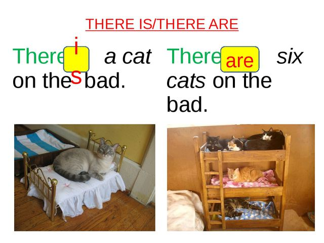 THERE IS/THERE ARE is are Therea caton the bad. Theresixcatson the bad.