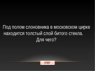 Под полом слоновника в московском цирке находится толстый слой битого стекла.