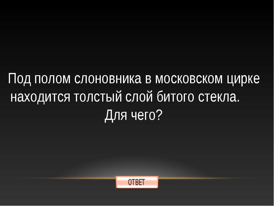 Под полом слоновника в московском цирке находится толстый слой битого стекла....