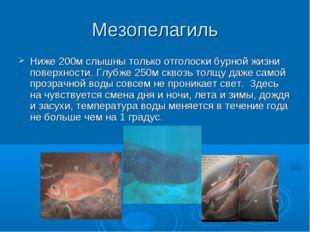Мезопелагиль Ниже 200м слышны только отголоски бурной жизни поверхности. Глуб