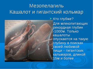 Мезопелагиль Кашалот и гигантский кольмар Кто глубже? Для млекопитающих рекор
