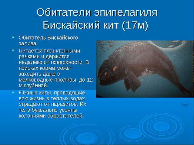 Обитатели эпипелагиля Бискайский кит (17м) Обитатель Бискайского залива. Пита...