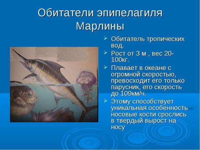 Обитатели эпипелагиля Марлины Обитатель тропических вод. Рост от 3 м , вес 20...