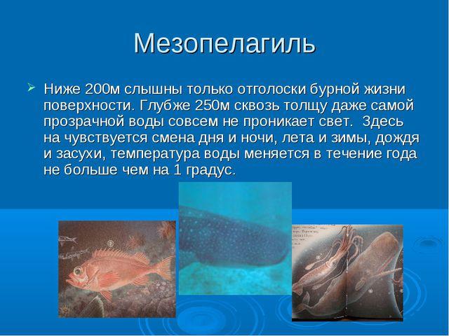Мезопелагиль Ниже 200м слышны только отголоски бурной жизни поверхности. Глуб...