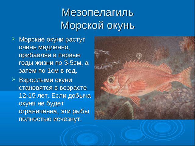 Мезопелагиль Морской окунь Морские окуни растут очень медленно, прибавляя в п...