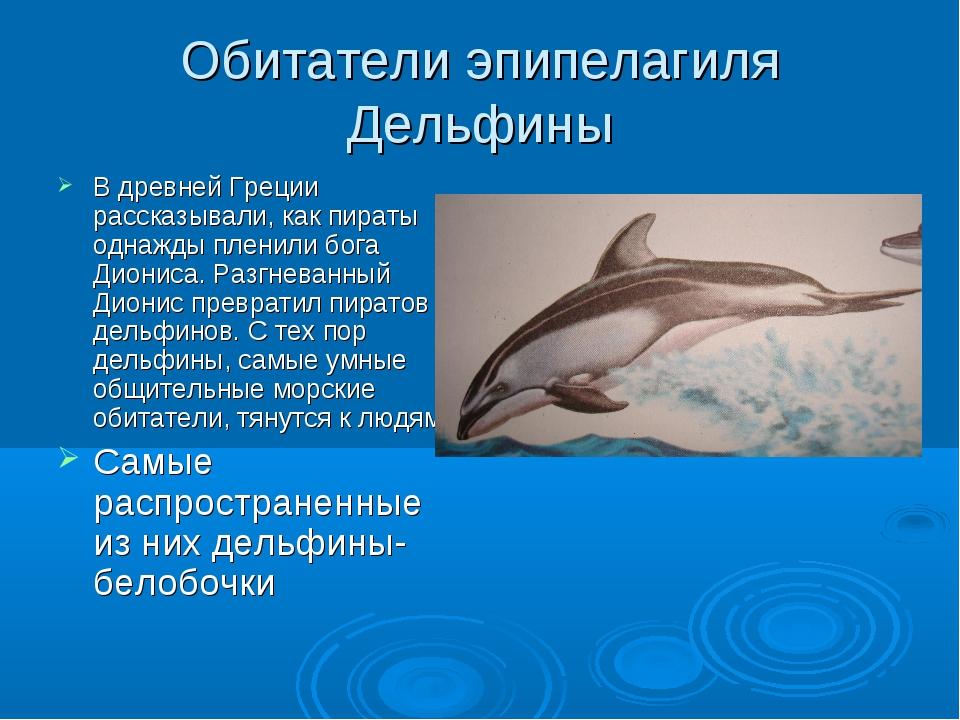 Обитатели эпипелагиля Дельфины В древней Греции рассказывали, как пираты одна...