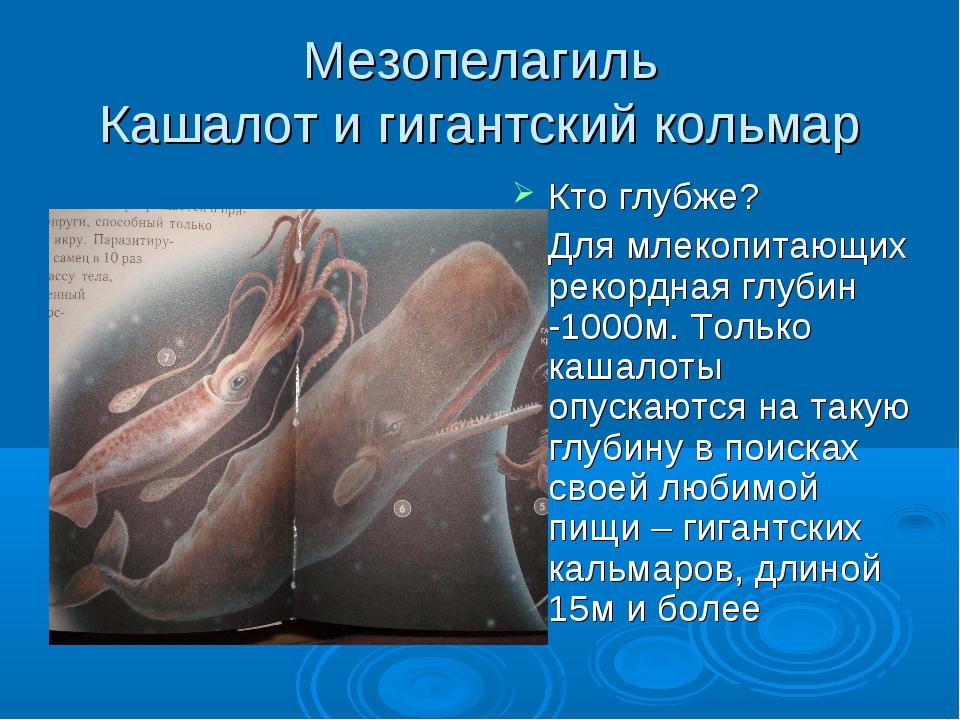 Мезопелагиль Кашалот и гигантский кольмар Кто глубже? Для млекопитающих рекор...