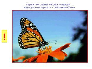 И Б Перелетная стайная бабочка совершает самые длинные перелеты – расстояние