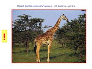 И Б Самое высокое млекопитающее. Его высота – до 6 м. ! Г Р У Н К А В Д Е Ё Ж