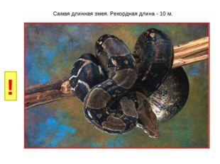 И Б Самая длинная змея. Рекордная длина - 10 м. ! Г Р У Н К А В Д Е Ё Ж З Й Л