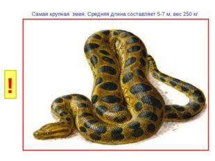 И Б Самая крупная змея. Средняя длина составляет 5-7 м, вес 250 кг ! Г Р У Н