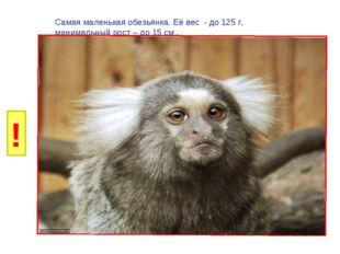 И Б И Г Р У Самая маленькая обезьянка. Её вес - до 125 г, минимальный рост –