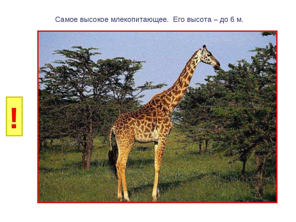 И Б Самое высокое млекопитающее. Его высота – до 6 м. ! Г Р У Н К А В Д Е Ё Ж...