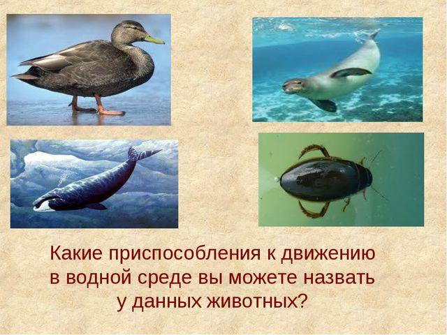 Какие приспособления к движению в водной среде вы можете назвать у данных жив...
