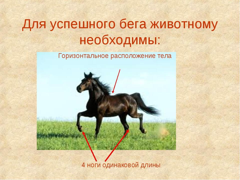 Для успешного бега животному необходимы: 4 ноги одинаковой длины Горизонтальн...
