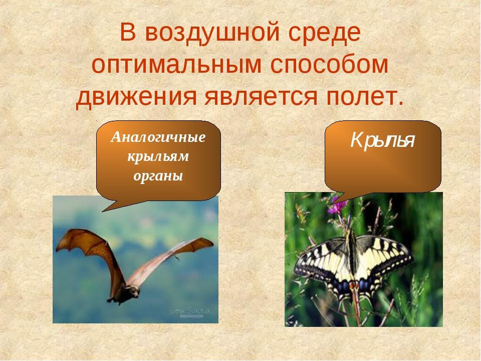 В воздушной среде оптимальным способом движения является полет. Крылья Аналог...