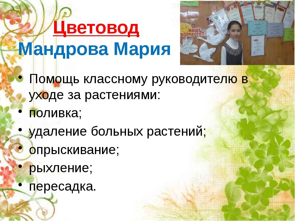 Цветовод Мандрова Мария Помощь классному руководителю в уходе за растениями:...