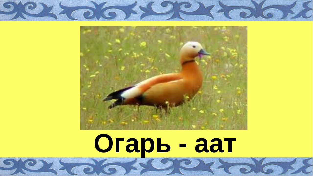 Огарь - аат