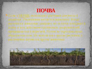 Соли в ПОЧВЕ используют растения для роста и развития . Растениями питаются ж